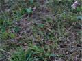 выпадение растений на газоне