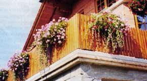 вертикальное озеленение балконов и лоджий